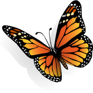 cropped-butterfly-icon.png